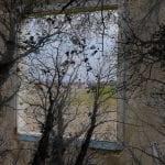 Enchanted Nature. Arte, Natura e Cambiamenti a Venezia Palazzo Mora