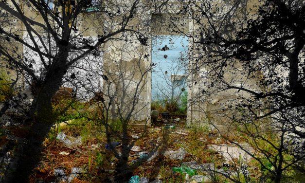Post biennale Venezia: arte, natura e cambiamenti