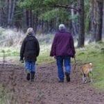 Vacanze con il cane o il gatto? la risposta è l'agriturismo!